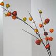 Chinese Lantern Orange 1039
