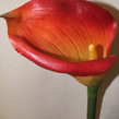 Calla Lily large 1418