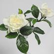 Gardenia Spray 1281