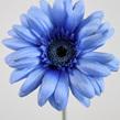Gerbera wide petal 1118 1116