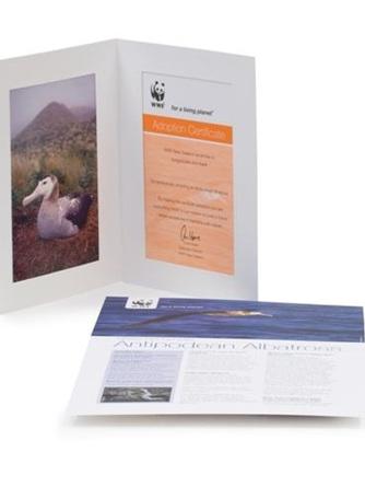 Adopt an Antipodean Albatross