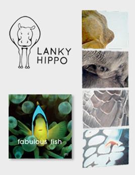 Lanky Hippo